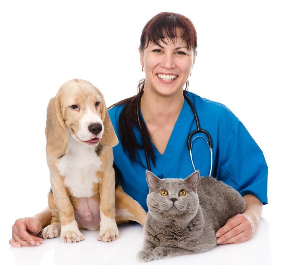 Ветеринарная клиника городе Одинцово микрорайоне Новая Трехгорка в городе Одинцово Московской области