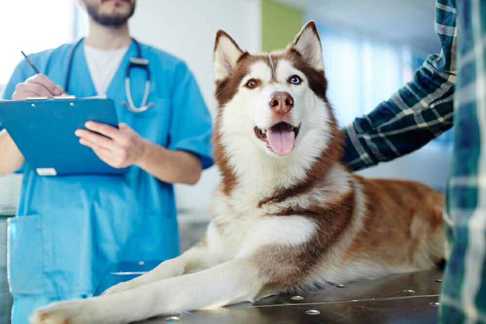 1. Вызов ветеринара на дом в Одинцово в микрорайоне Новая Трехгорка