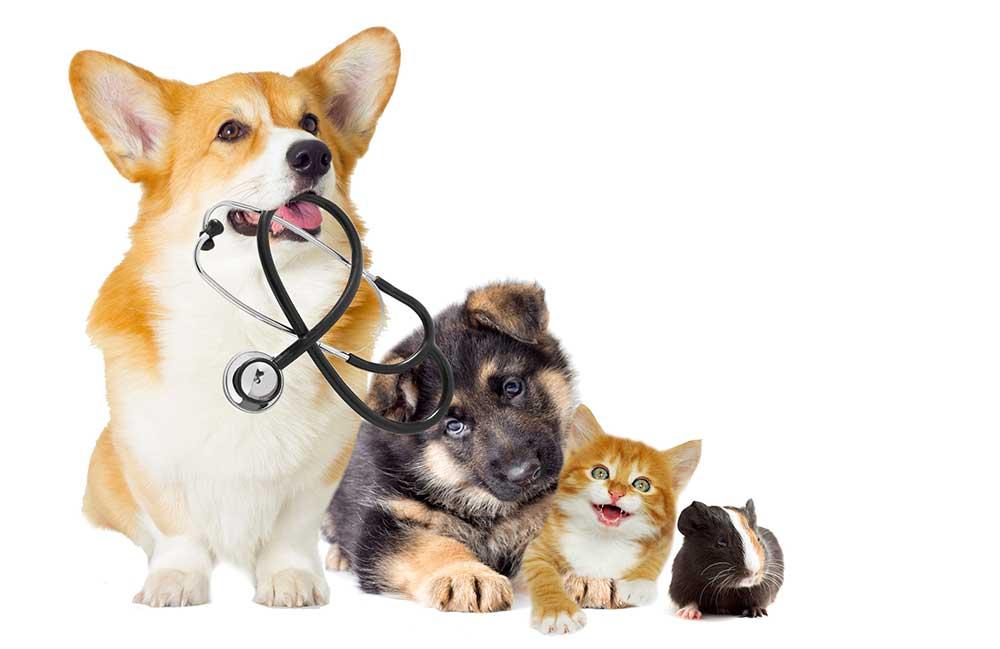 Ветеринарная служба на дом в Одинцово