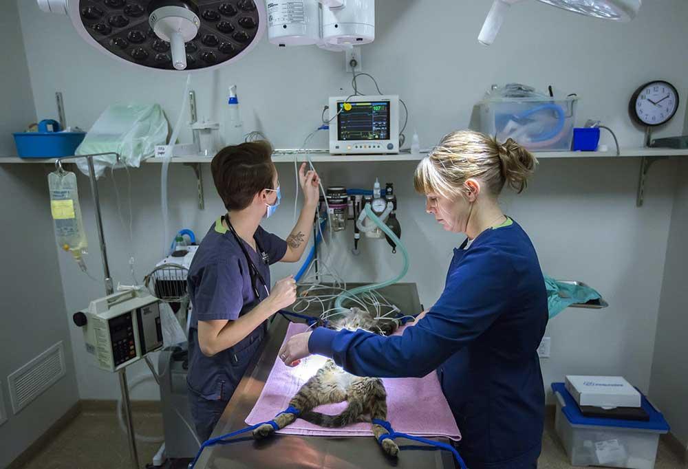 Ветеринар на дом вызов городе Одинцово
