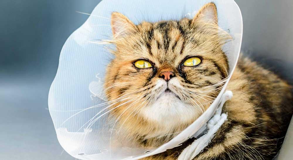 Стерилизовать кошку Одинцово микрорайоне Новая Трехгорка